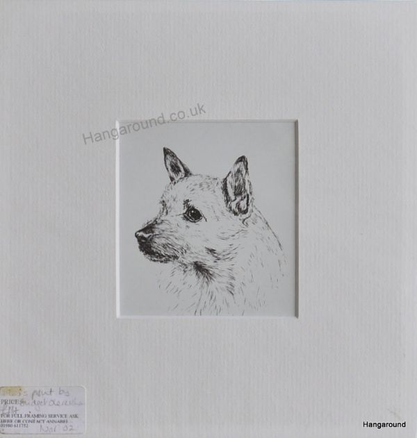 Norwich Terrier - head - Nor O2 - 1960's print by Bridget Olerenshaw